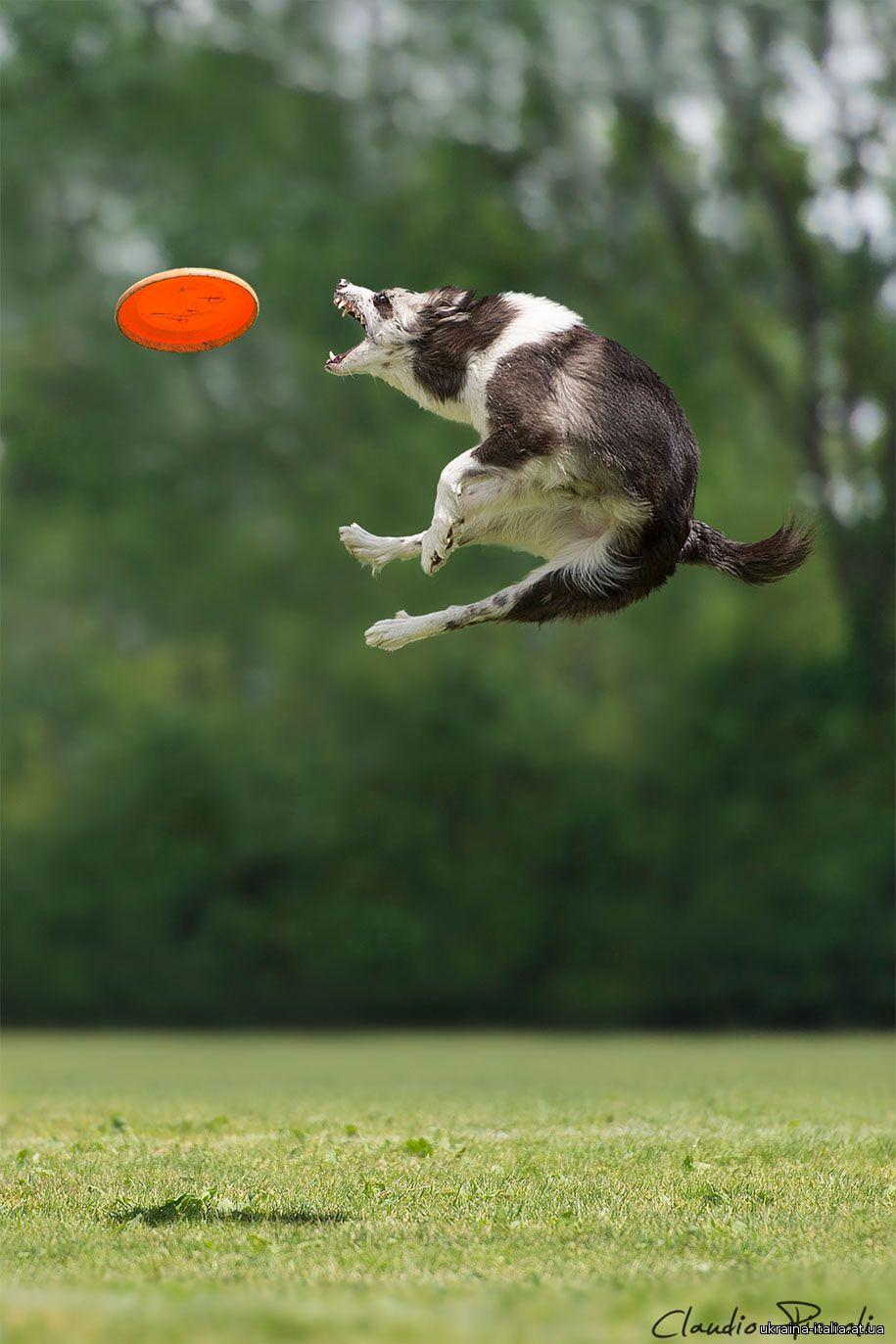 А вы знали, что собаки умеют летать? Серия фоторабот итальянского фотографа Клаудио Пикколи