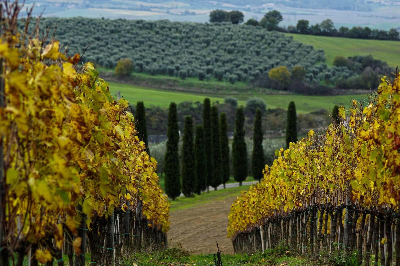 Виноградники в фотографиях, Италия